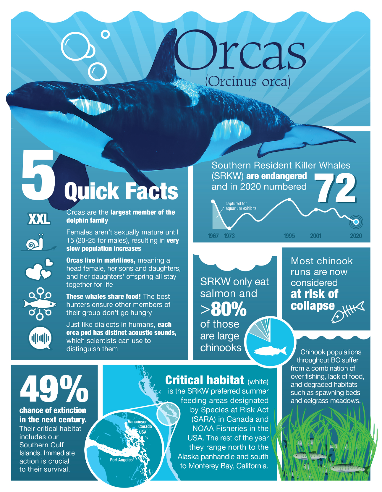 killer whale infographic letter page format
